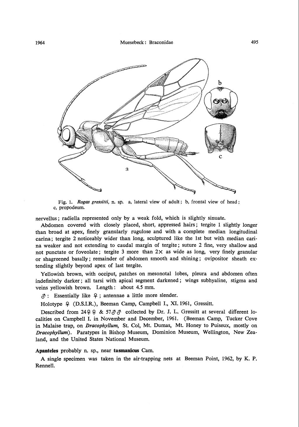 BUGZ: Muesebeck,C F W  1964: Insects of Campbell Island
